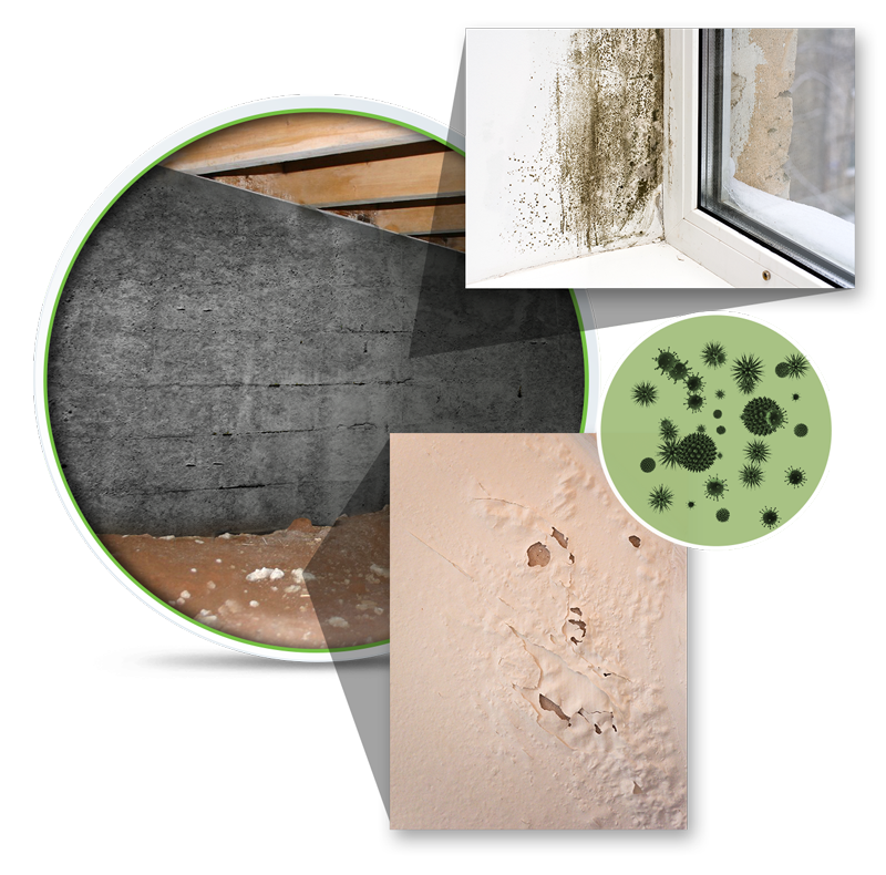 mold remediation charlotte nc